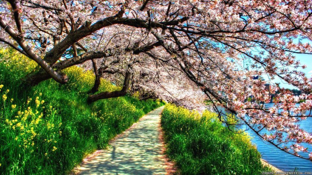 10 Most Popular Spring Nature Desktop Wallpaper FULL HD 1080p For PC Desktop 2018 free download find out spring nature wallpapers hd wallpaper on http 1024x576