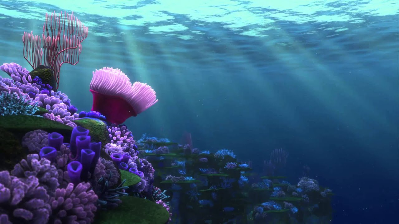 finding nemo - screensaver (coral reef 1) - youtube