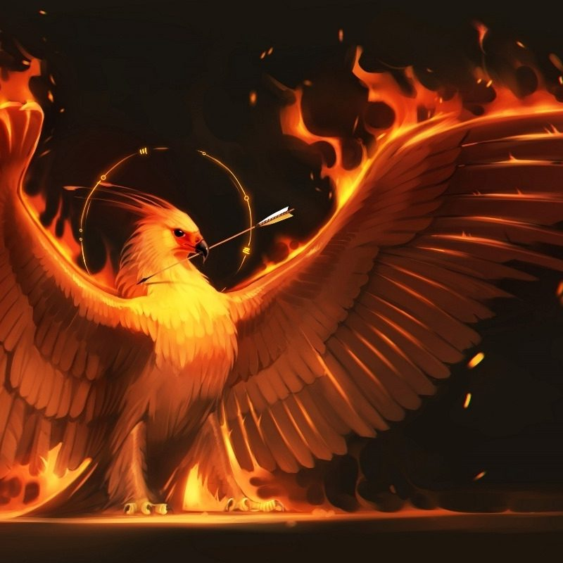 10 Latest Pics Of Phoenix Bird FULL HD 1080p For PC Background 2018 free download fire arrow phoenix bird art wings fire birds fantasy flame fm30 home 800x800