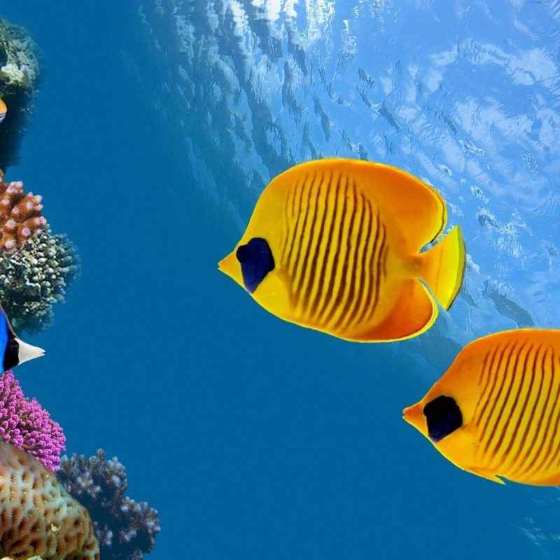 10 New Hd Wallpapers 1080P Underwater FULL HD 1920×1080 For PC Desktop 2018 free download fish wallpaper hd group 56 800x800