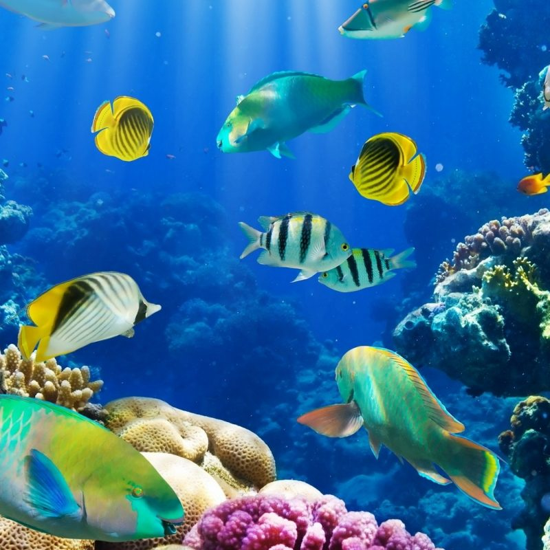 10 Most Popular Tropical Fishes Wallpapers Hd FULL HD 1920×1080 For PC Background 2020 free download fish wallpapers hd pixelstalk 1 800x800