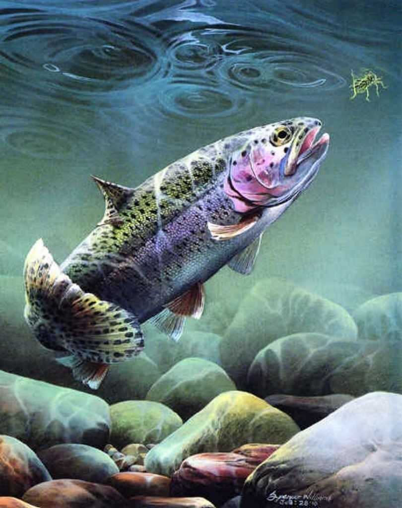 fishing wallpaper for iphone fly fishing trout wallpaper | art fly