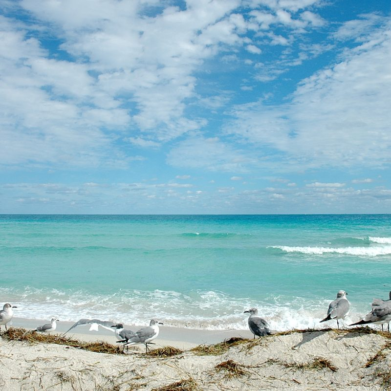 10 Top Florida Beach Wallpaper Hd FULL HD 1920×1080 For PC Background 2018 free download florida beach wallpaper 20653 2048x1362 px hdwallsource 800x800
