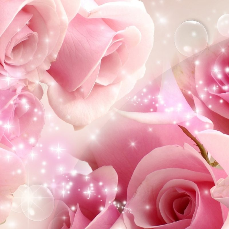10 Latest Pink Rose Background Wallpaper FULL HD 1920×1080 For PC Background 2018 free download flowers cool pink rose wallpapers desktop phone tablet awesome 800x800