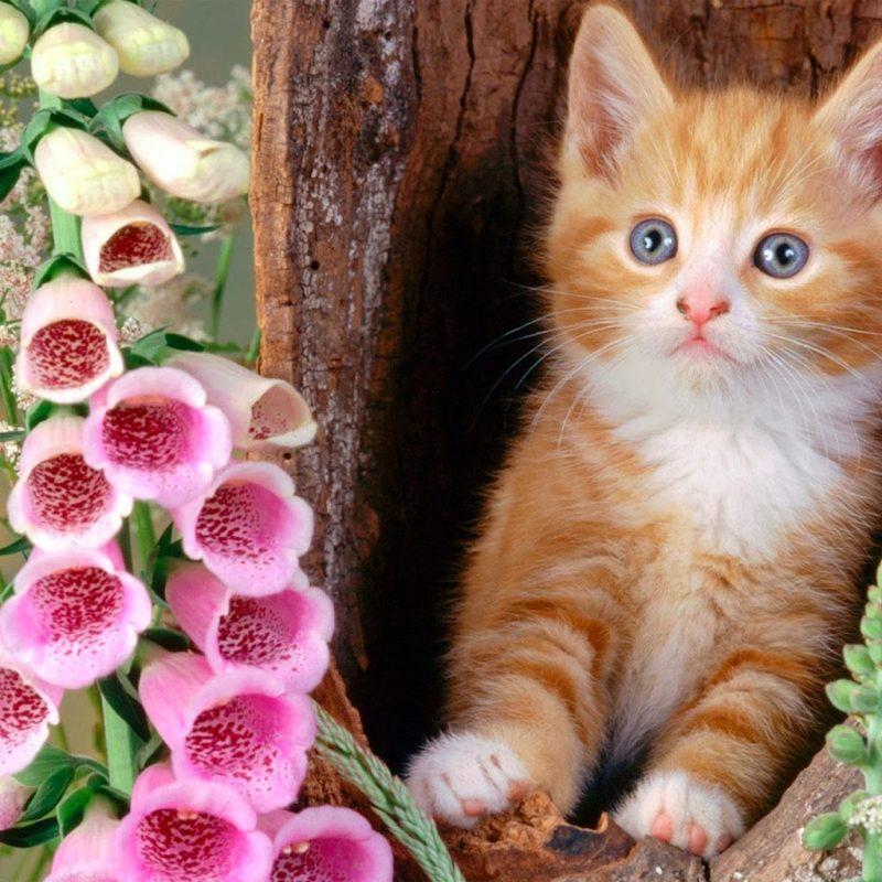 10 Top Cat Wallpapers Free Download FULL HD 1920×1080 For PC Desktop 2018 free download flowers drawings for kids google zoeken cat n flowers 800x800