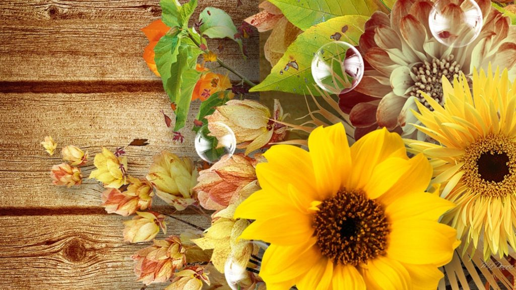 10 New Fall Flowers Desktop Backgrounds FULL HD 1080p For PC Background 2018 free download flowers fall flowers autumn boards wood pods bubbles sunflowers 1024x576