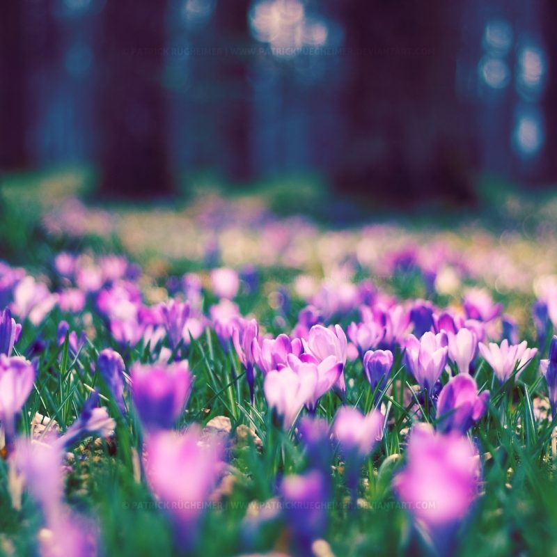 10 Most Popular Field Of Flowers Background FULL HD 1920×1080 For PC Background 2021 free download flowers field background 6985443 800x800