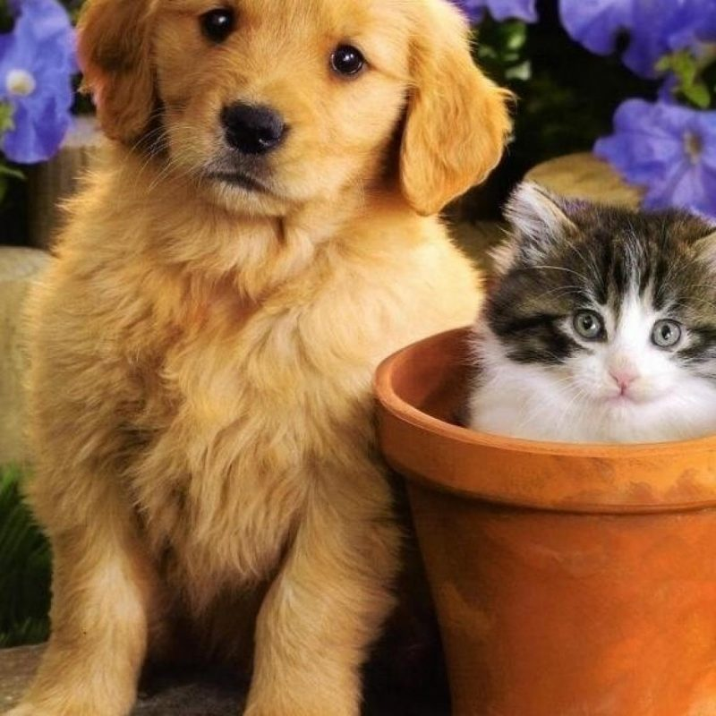 10 Top Puppies And Kittens Wallpaper FULL HD 1080p For PC Desktop 2021 free download flowers puppies kittens wallpaper 10045 1 800x800