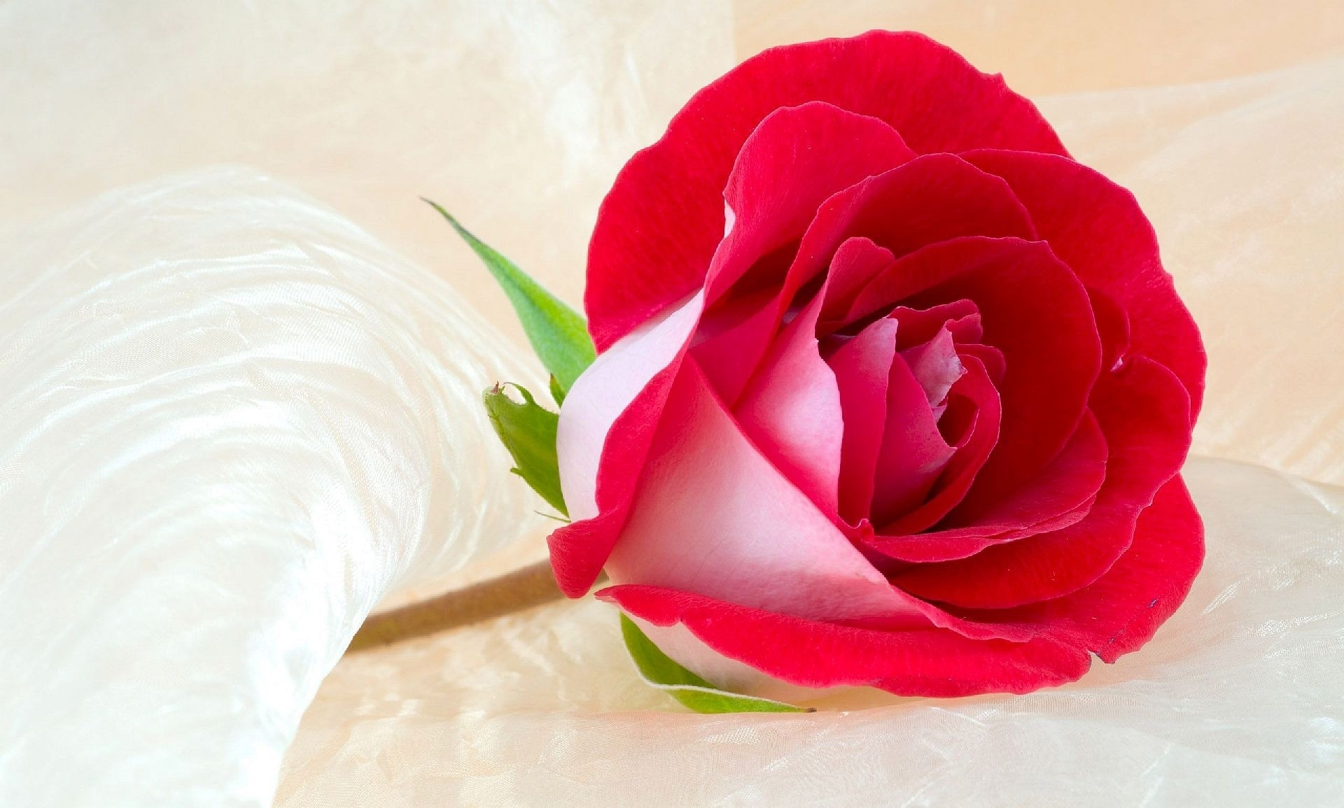 flowers: red rose beautiful wallpaper flower hd free download for hd