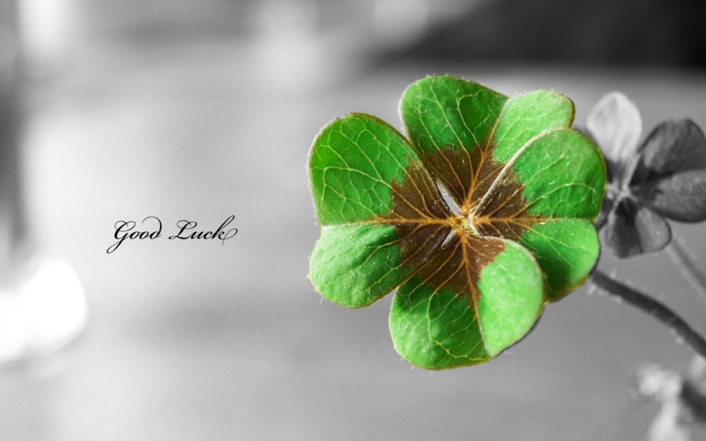10 Latest 4 Leaf Clover Wallpapers FULL HD 1080p For PC Background 2018 free download flowers text typography shamrock luck macro selective coloring 1024x640