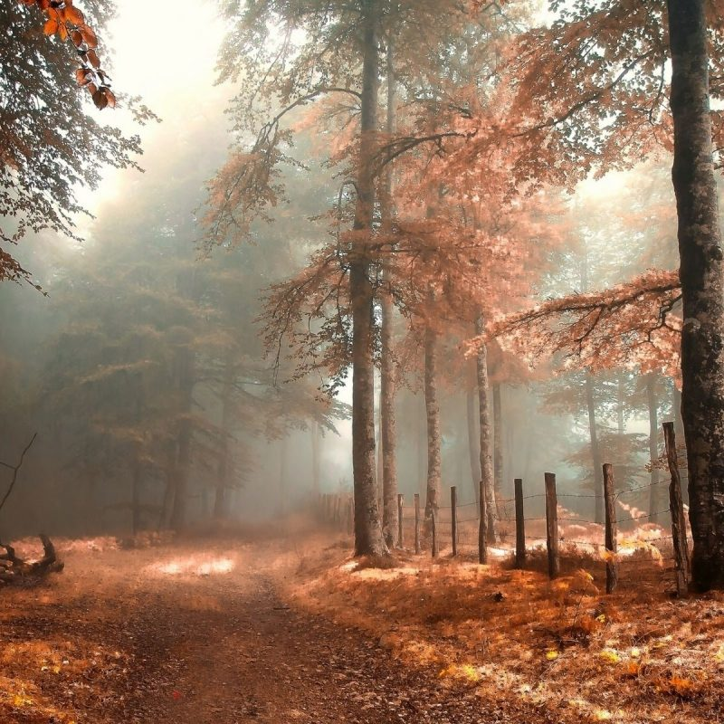 10 New Autumn Forest Wallpaper Hd FULL HD 1920×1080 For PC Background 2018 free download foggy autumn forest nature wallpaper media file pixelstalk 800x800