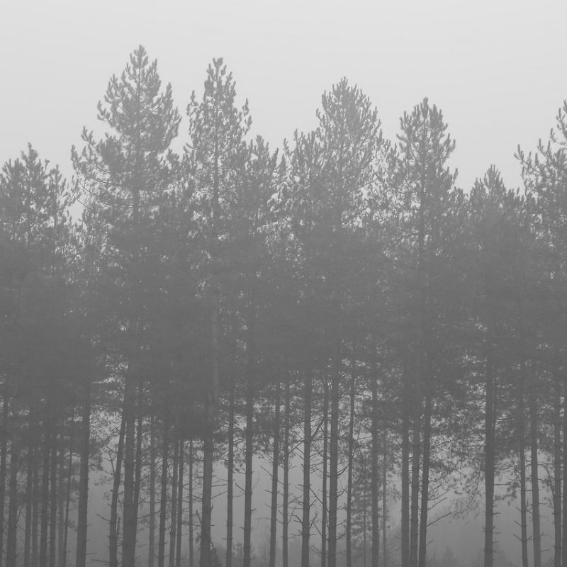 10 Best Black And White Forest Background FULL HD 1080p For PC Background 2018 free download foggy forest background tumblr awesome black and white cloudpix 800x800