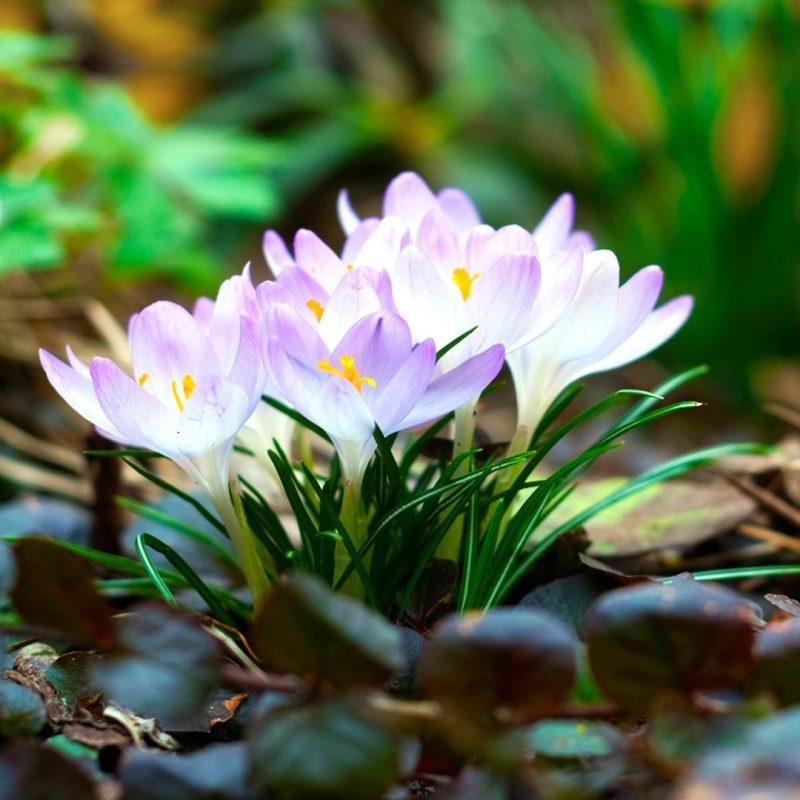 10 Top Early Spring Wallpaper Hd FULL HD 1080p For PC Background 2020 free download fond decran au debut du printemps 53 xshyfc 800x800