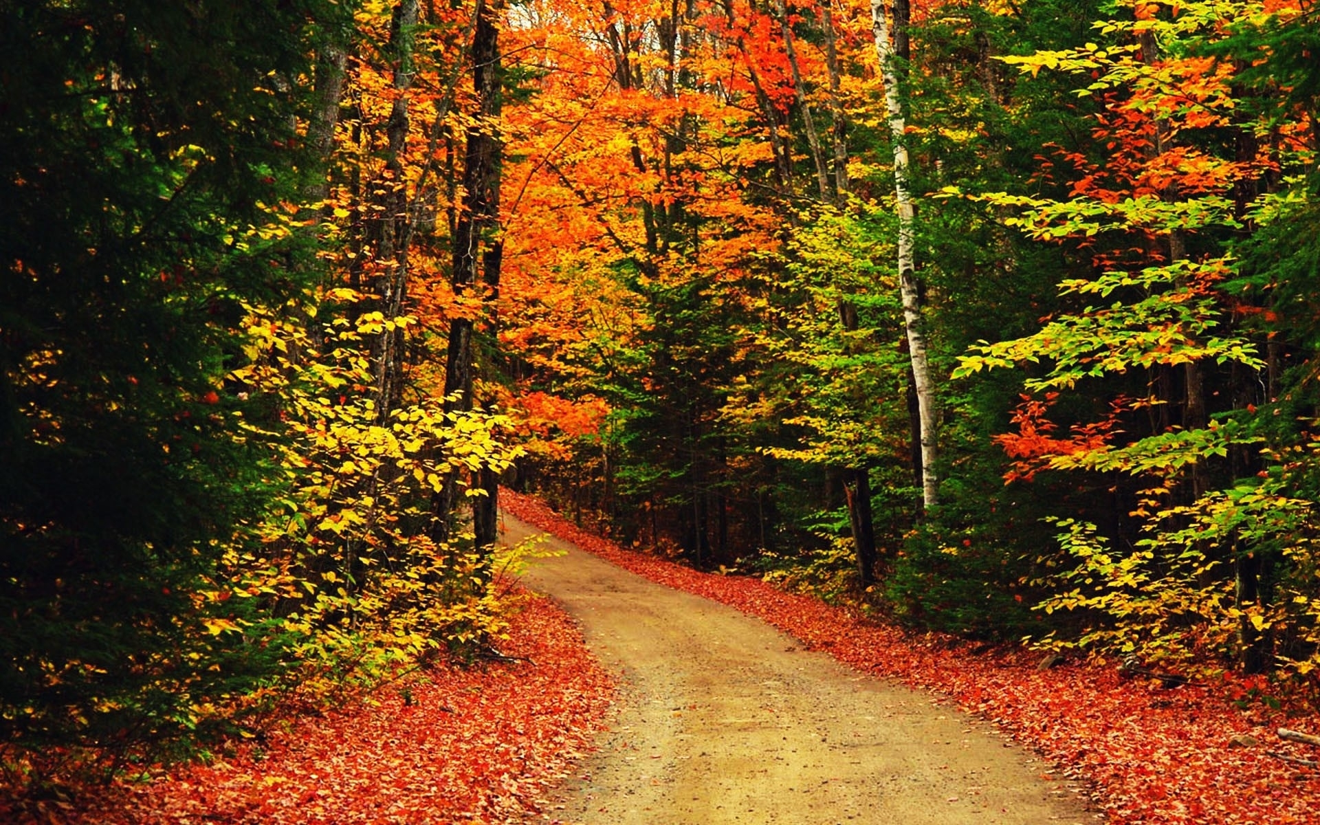 forest: autumn scenic scene beautiful gorgeous scrne forest