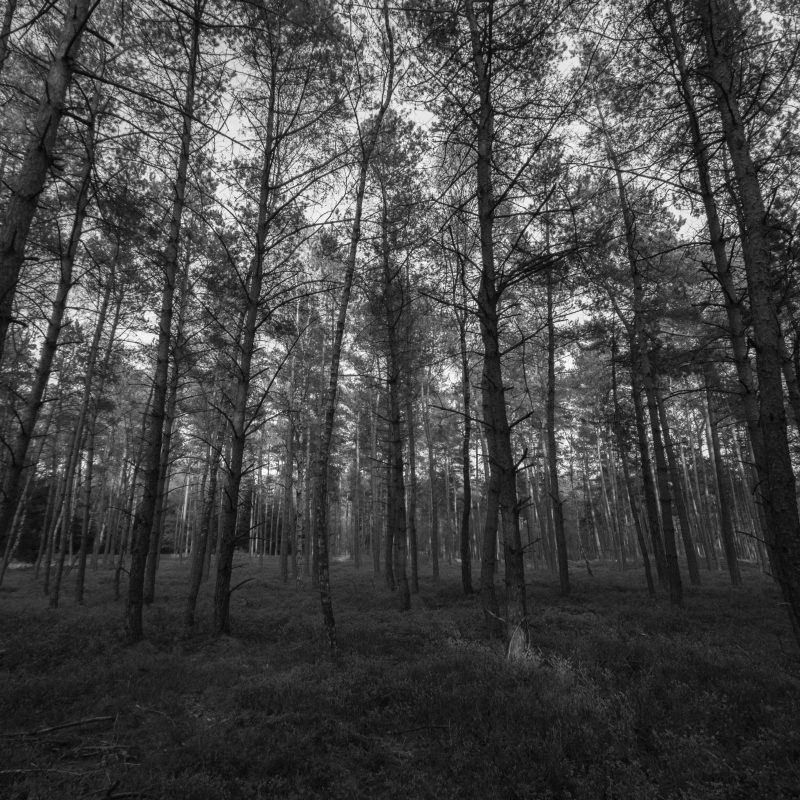 10 New Black And White Forest Wallpaper FULL HD 1920×1080 For PC Background 2018 free download forest black and white e29da4 4k hd desktop wallpaper for 4k ultra hd tv 800x800