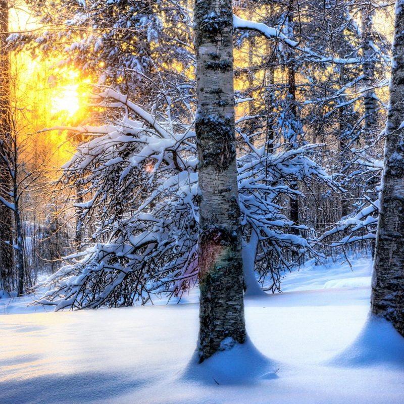 10 Latest Winter Forest Hd Wallpaper FULL HD 1080p For PC Desktop 2018 free download forest hd wallpaper 1 800x800