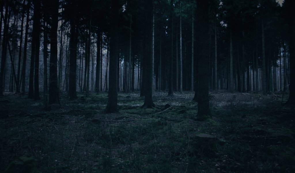 10 Top Dark Forest Background Tumblr FULL HD 1080p For PC Background 2020 free download forest stock 28sed rah stock on deviantart 1024x603