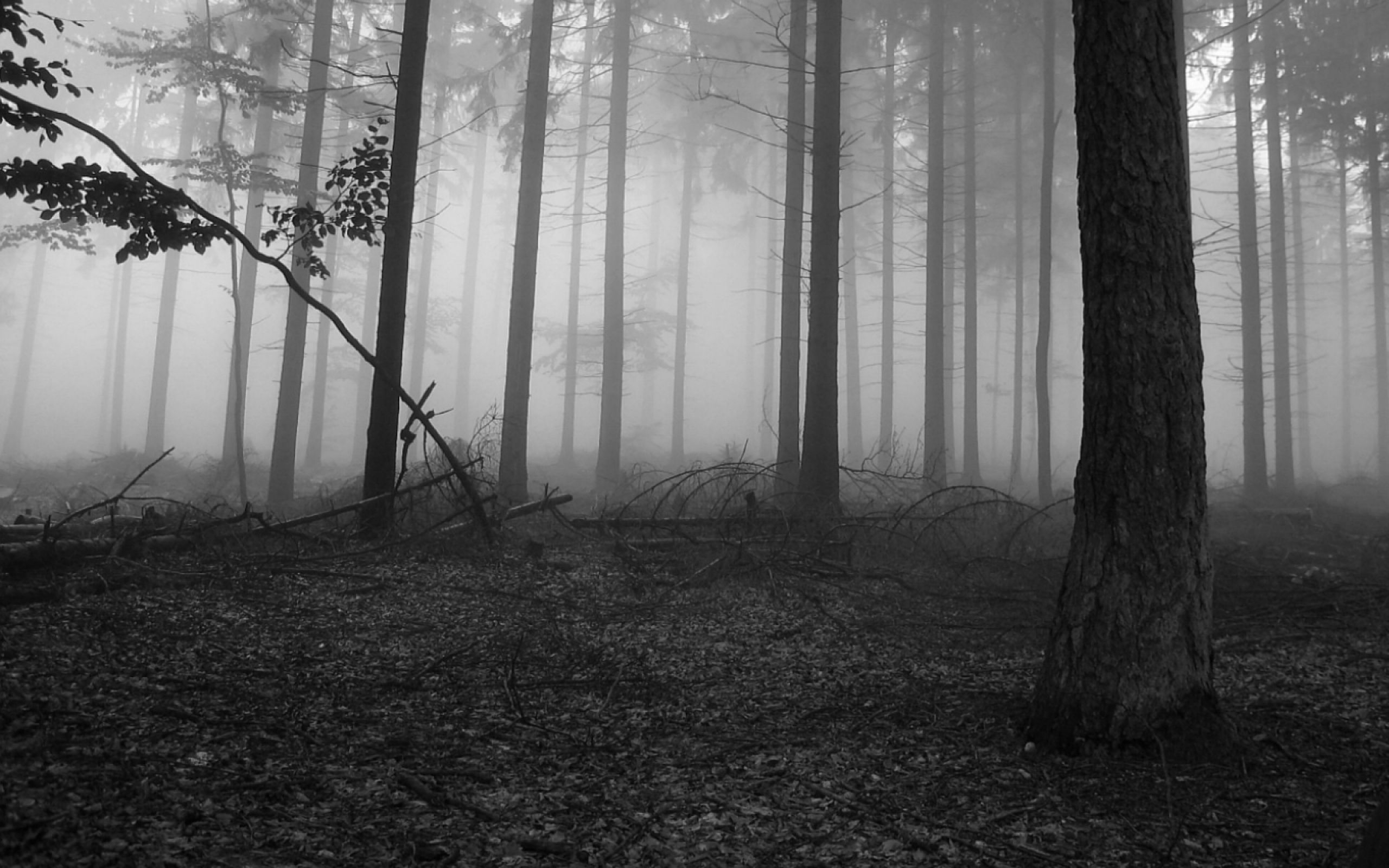 forest wallpaper black and white - wallpaper. | nof - egd reference