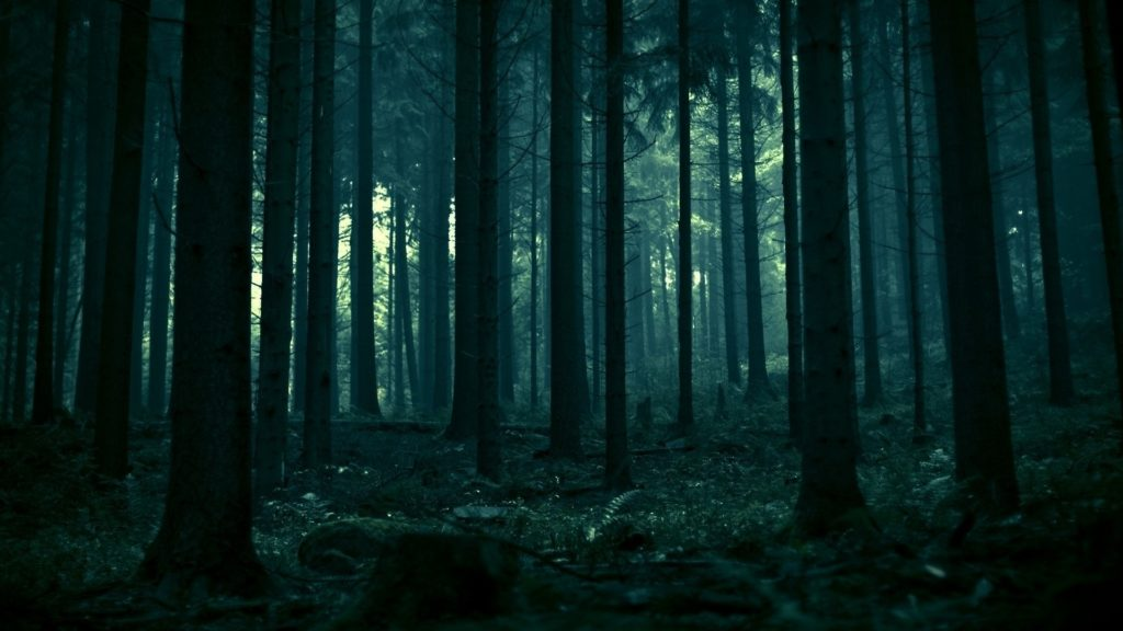 10 Top Dark Forest Background Tumblr FULL HD 1080p For PC Background 2018 free download forest wallpaper tumblr 3 gravity falls covers me pinterest 1024x576