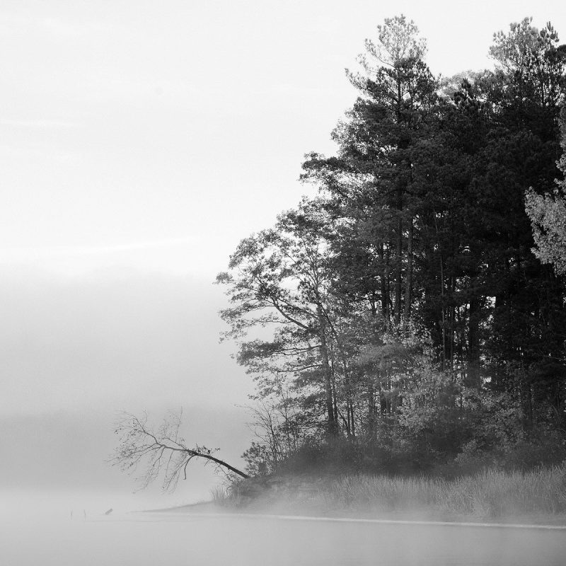 10 Top Forest Wallpaper Black And White FULL HD 1920×1080 For PC Desktop 2018 free download forests black trees fog white nature forests forest desktop 800x800