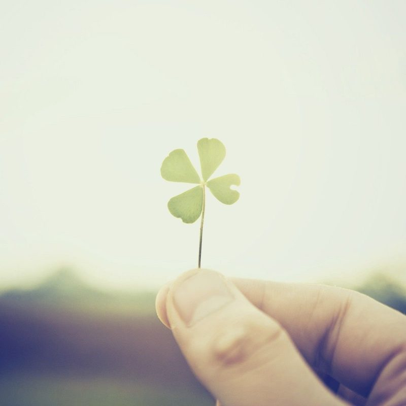 10 Top Four Leaf Clover Wallpaper FULL HD 1920×1080 For PC Background 2020 free download four leaf clover 868880 walldevil 800x800
