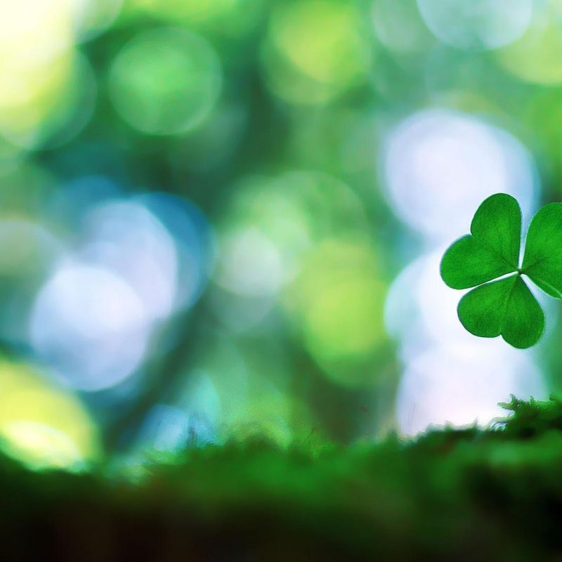 10 Top Four Leaf Clover Wallpaper FULL HD 1920×1080 For PC Background 2020 free download four leaf clover wallpaper 41444 800x800