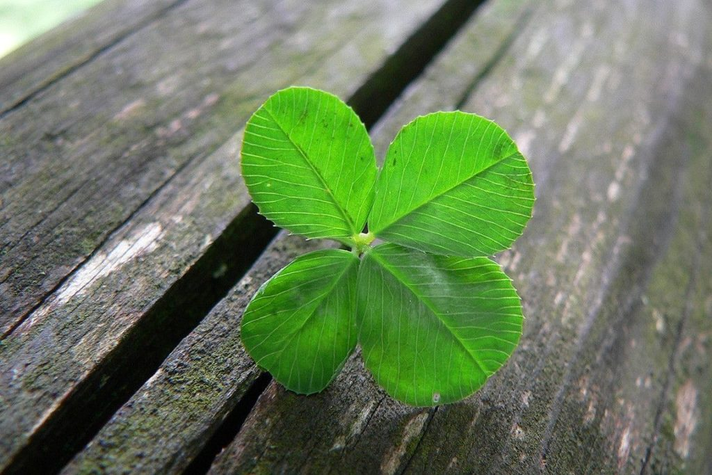 10 Latest 4 Leaf Clover Wallpapers FULL HD 1080p For PC Background 2018 free download four leaf clover wallpapers wallpaper cave all wallpapers 1024x683