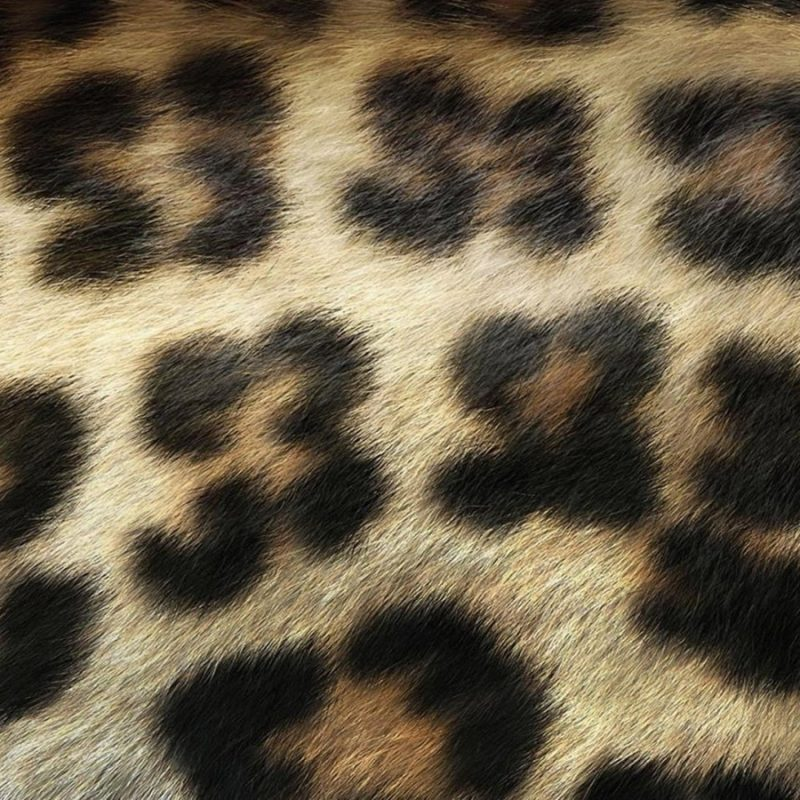 10 Top Leopard Print Wallpaper Hd FULL HD 1920×1080 For PC Background 2020 free download free animal print wallpaper background awesome leopard print 800x800