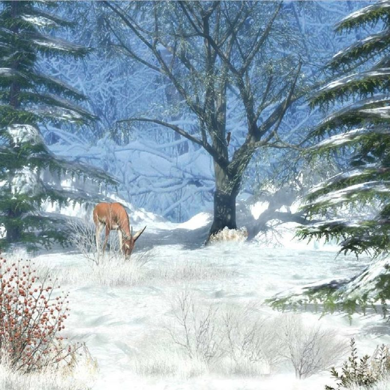 10 New Free Animated Winter Desktop Wallpaper FULL HD 1920×1080 For PC Background 2020 free download free animated winter desktop wallpaper winter afternoon animated 800x800