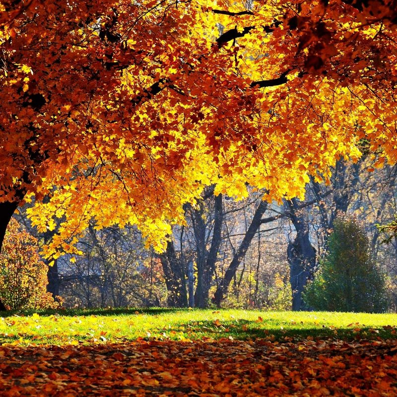 10 Most Popular Fall Wallpapers For Desktop FULL HD 1080p For PC Desktop 2018 free download free autumn desktop wallpaper backgrounds wallpaper cave 800x800