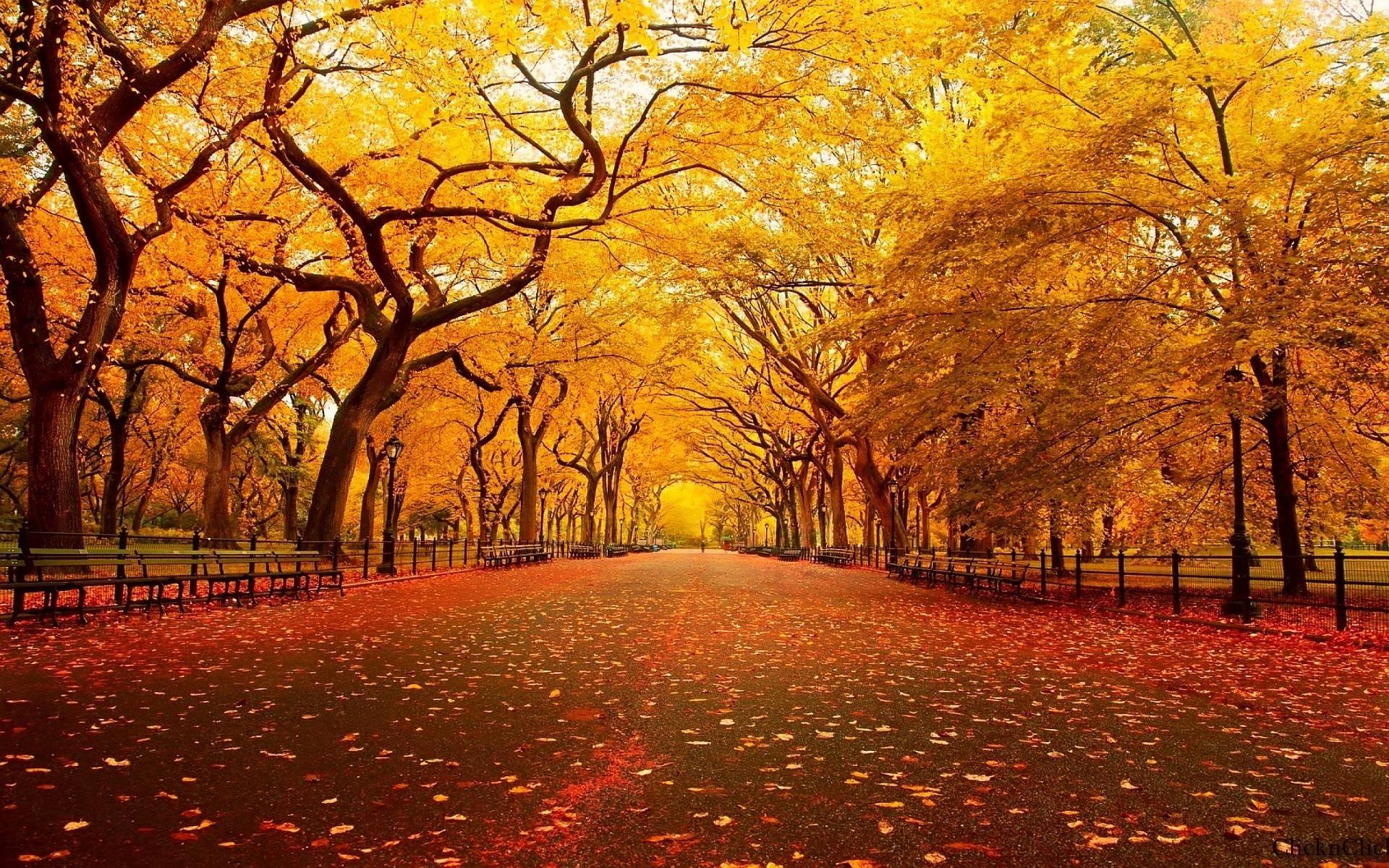 free autumn screensavers wallpapers - wallpaper cave