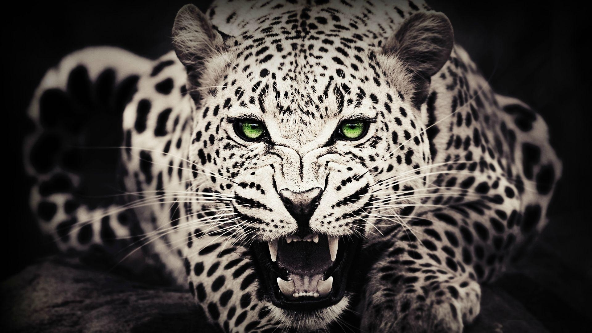 free cool wild animal wallpapers images « long wallpapers