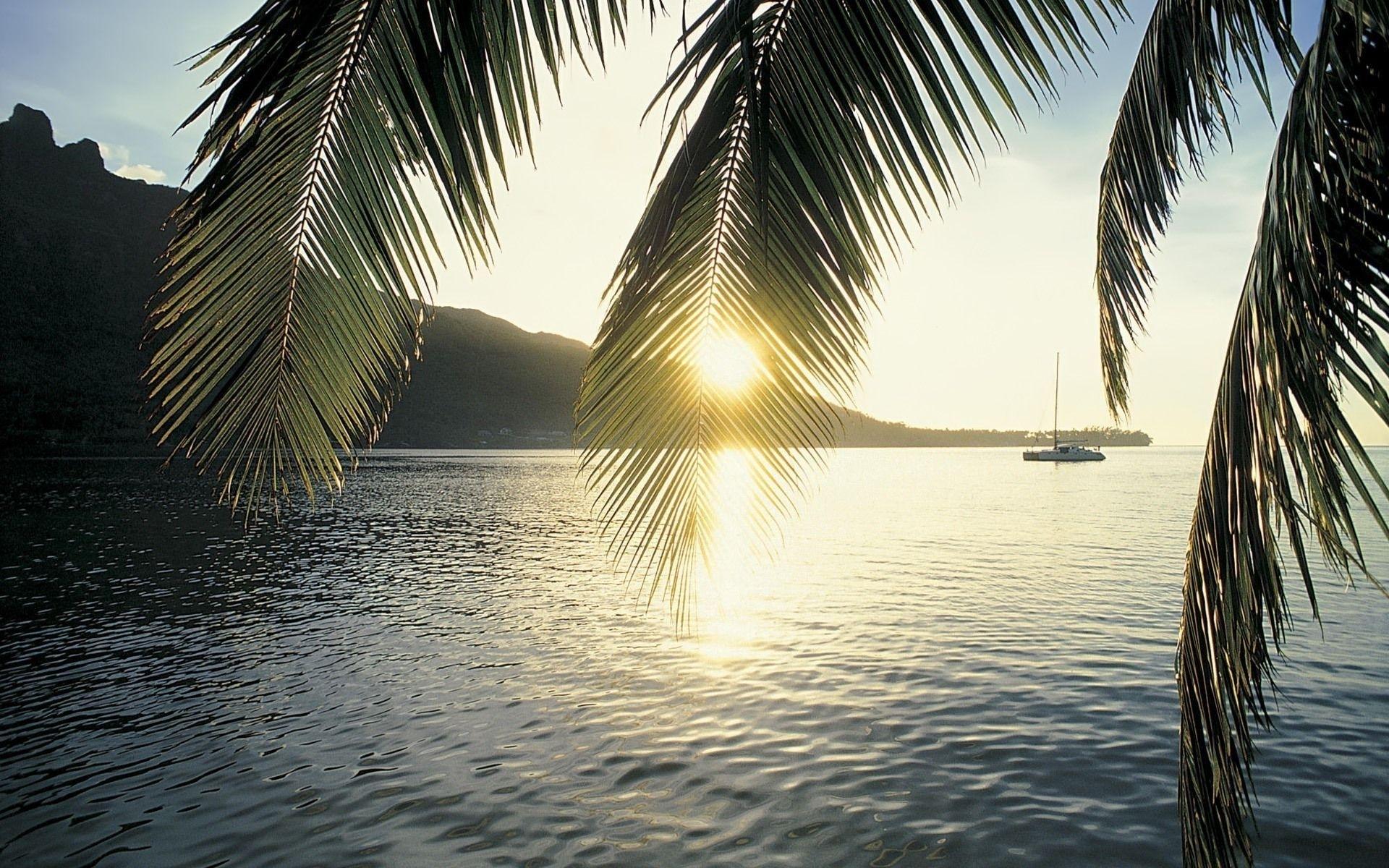 10 Latest Palm Tree Desktop Backgrounds FULL HD 1080p For PC Desktop