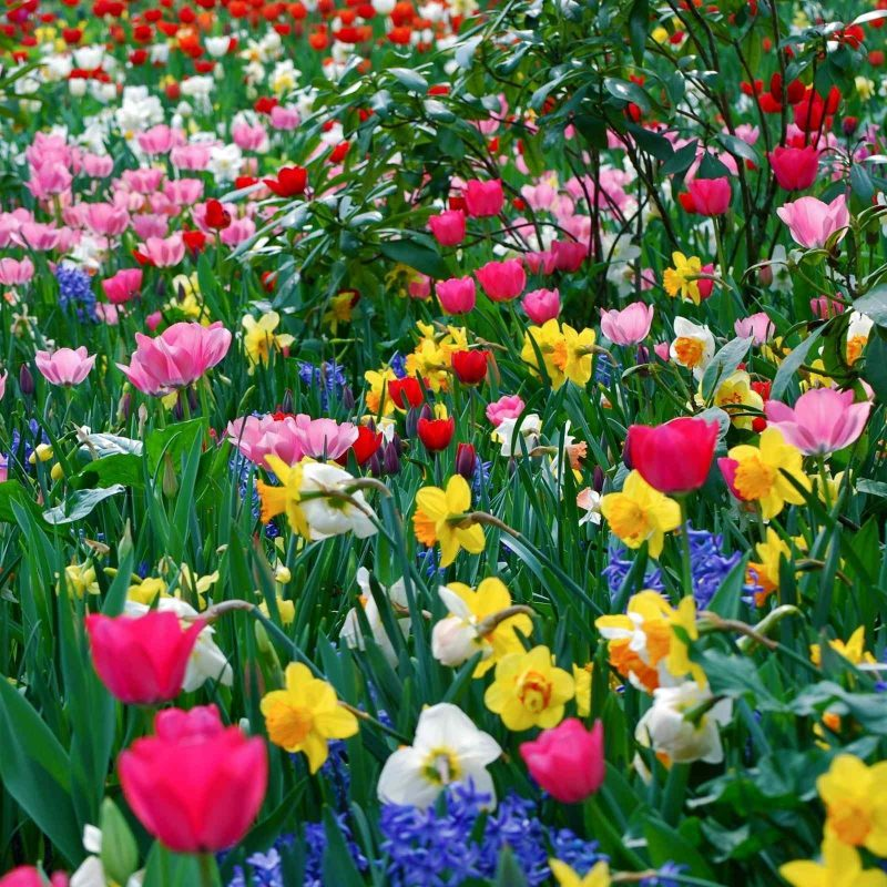 10 Best Free Computer Wallpaper Spring FULL HD 1080p For PC Desktop 2018 free download free desktop wallpaper spring flowers 800x800