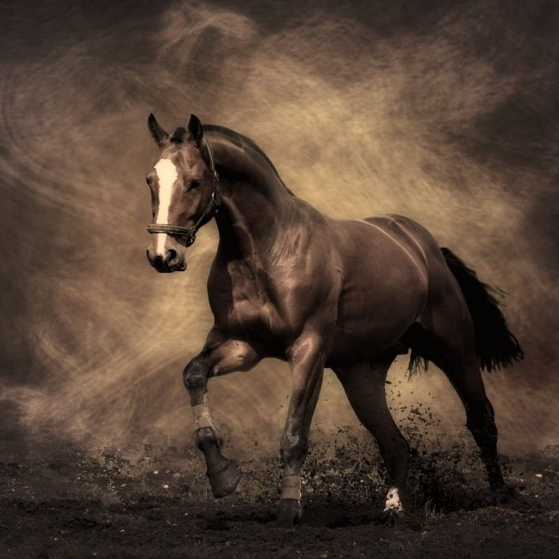 10 Top Free Horse Screensavers And Wallpaper FULL HD 1920×1080 For PC Background 2018 free download free desktop wallpapers horses wallpaper hd wallpapers pinterest 800x800