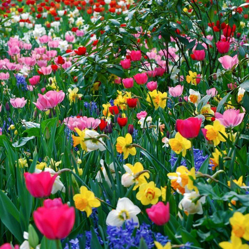 10 Best Spring Pictures For Desktop FULL HD 1920×1080 For PC Desktop 2018 free download free desktop wallpapers spring flowers wallpaper cave 4 800x800