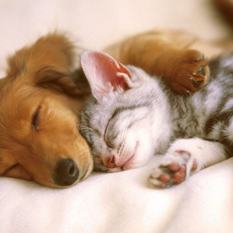 10 Top Cats And Dog Wallpapers FULL HD 1920×1080 For PC Desktop 2020 free download free dog and cat wallpaper desktop background long wallpapers 800x800