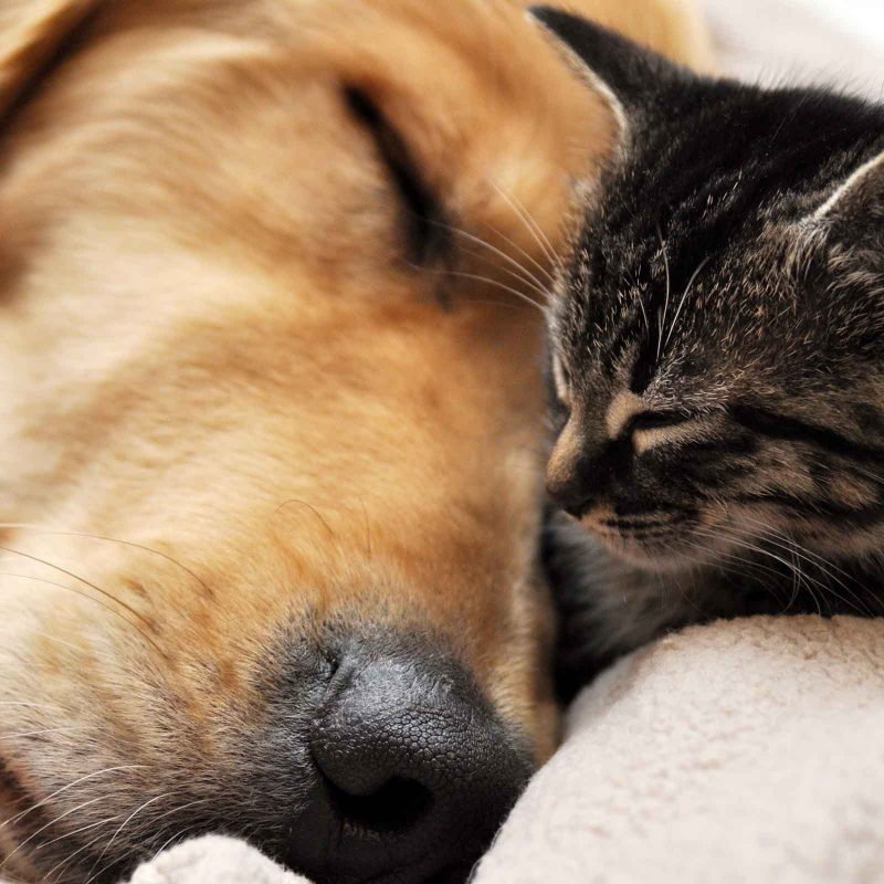 10 Best Dog And Cat Wallpapers FULL HD 1920×1080 For PC Background 2020 free download free dog and cat wallpaper high resolution long wallpapers 1 800x800