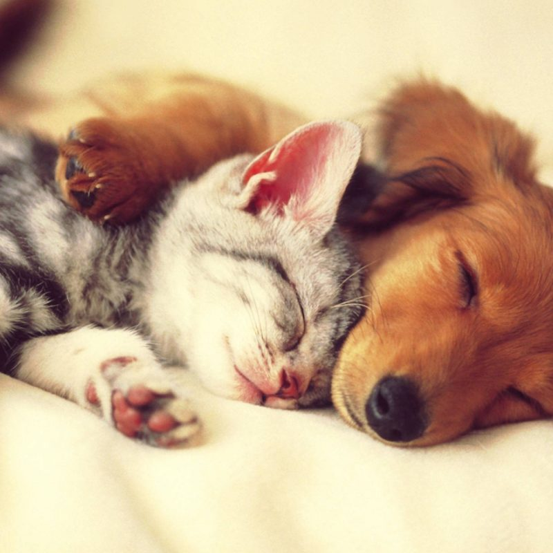 10 Most Popular Cat And Dog Wallpaper FULL HD 1080p For PC Background 2018 free download free dog and cat wallpapers photo long wallpapers 1 800x800