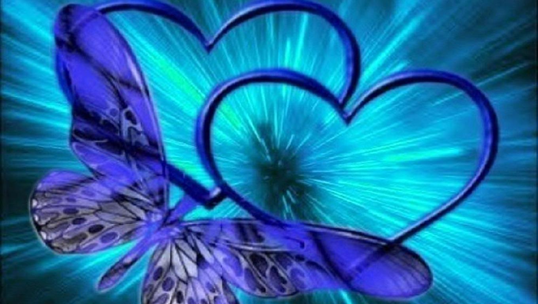 free download butterfly wallpaper 4023218 butterfly wallpapers free