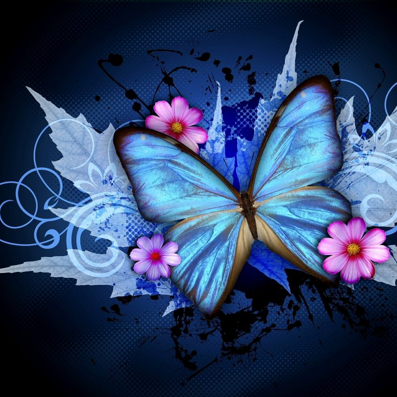 10 Best Wallpaper Butterfly Free Download FULL HD 1920×1080 For PC Desktop 2018 free download free download butterfly wallpaper butterfly wallpapers free download 800x800