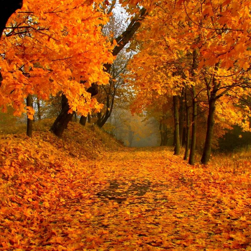 10 Most Popular Fall Foliage Wall Paper FULL HD 1080p For PC Background 2020 free download free download fall foliage wallpaper media file pixelstalk 800x800