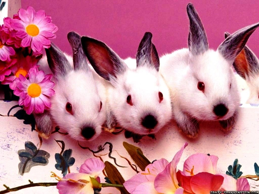 10 New Free Easter Wallpaper For Computer FULL HD 1920×1080 For PC Desktop 2021 free download free easter wallpapers for computer happy easter 2018 1024x768