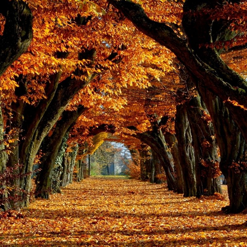 10 Most Popular Free Autumn Wallpaper For Computer FULL HD 1920×1080 For PC Background 2018 free download free fall backgrounds autumn trees wallpaper best free wallpaper 2 800x800