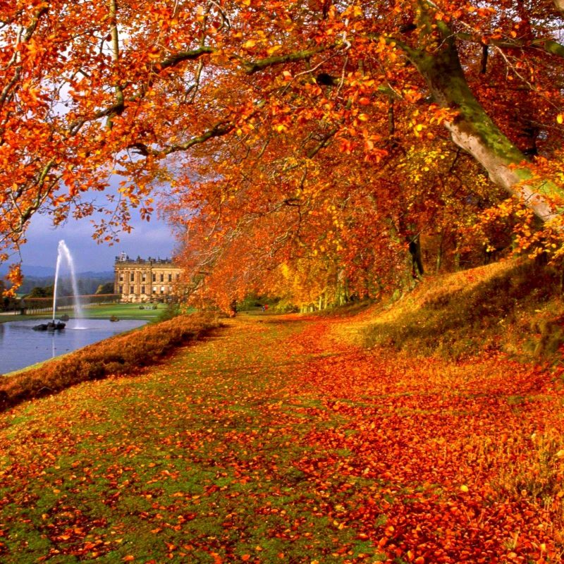 10 Most Popular Free Autumn Wallpaper For Computer FULL HD 1920×1080 For PC Background 2018 free download free fall backgrounds desktop wallpaper cave 17 800x800
