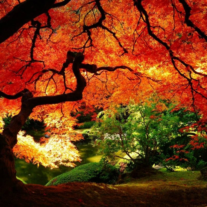 10 Most Popular Fall Wallpapers For Desktop FULL HD 1080p For PC Desktop 2018 free download free fall backgrounds desktop wallpaper cave 3 800x800
