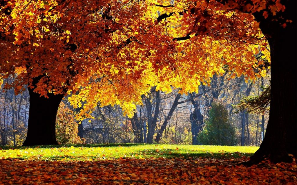 10 Top Free Autumn Wallpaper Backgrounds FULL HD 1920×1080 For PC Desktop 2018 free download free fall computer wallpaper desktop wallpaper www fall 1024x640