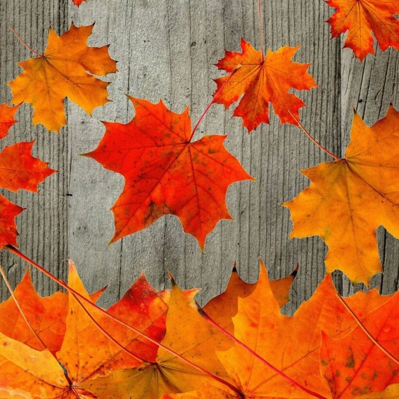 10 Most Popular Free Autumn Wallpaper For Computer FULL HD 1920×1080 For PC Background 2018 free download free fall desktop wallpaper downloads 1280x1024 fall wallpapers 2 800x800