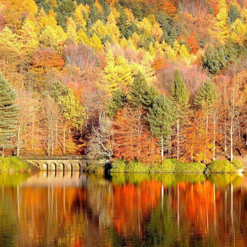 10 New Free Fall Background Wallpaper FULL HD 1920×1080 For PC Desktop 2018 free download free fall desktop wallpapers backgrounds 1024x794px wallpaper 10 800x800