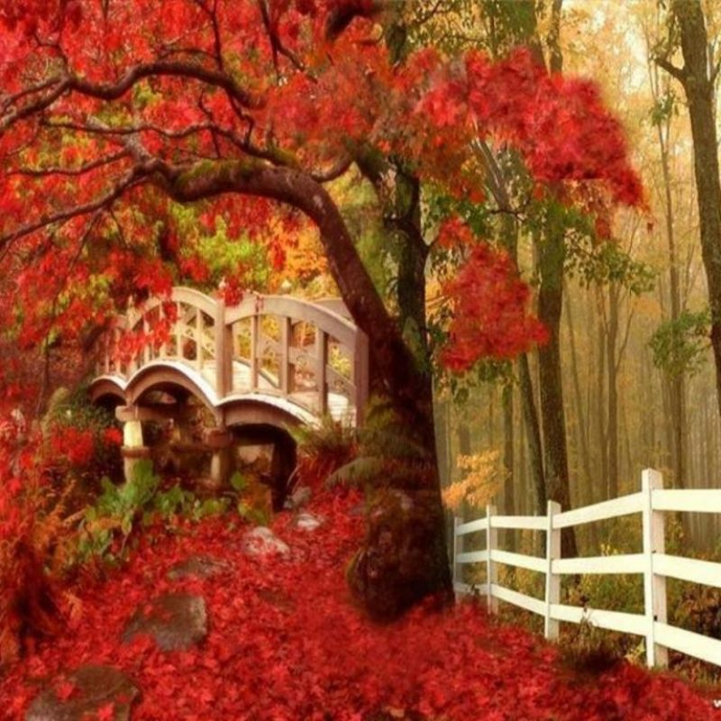 10 Latest Free Fall Screensavers Wallpaper FULL HD 1080p For PC Background 2018 free download free fall screensavers and wallpaper free orange autumn road 1 800x800
